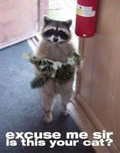 Ваш котик